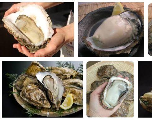 岩牡蠣Google画像検索